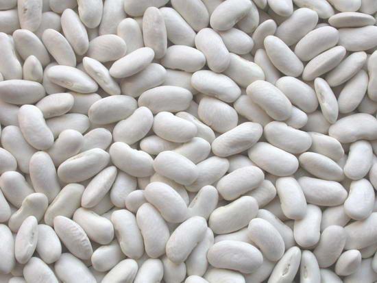 الفاصوليا البيضاء