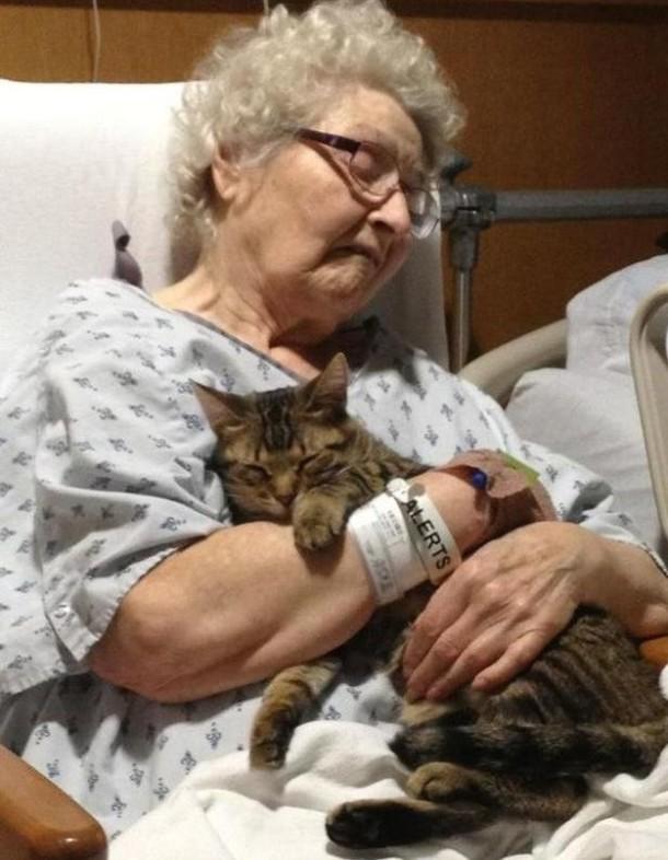 أسرار وحقائق لماذا يحب الأغلبية القطط ؟ القطط-.ثقف-�