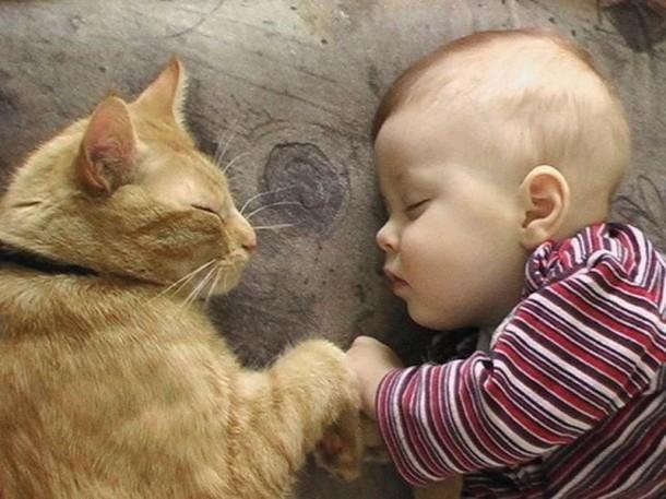 أسرار وحقائق لماذا يحب الأغلبية القطط ؟ القطط-.-ثقف-
