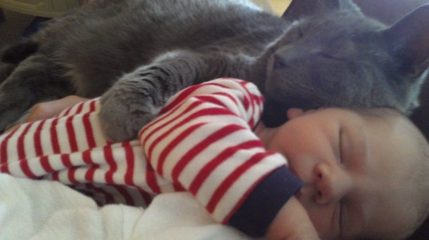 أسرار وحقائق لماذا يحب الأغلبية القطط ؟ القطط.ثقف-ن