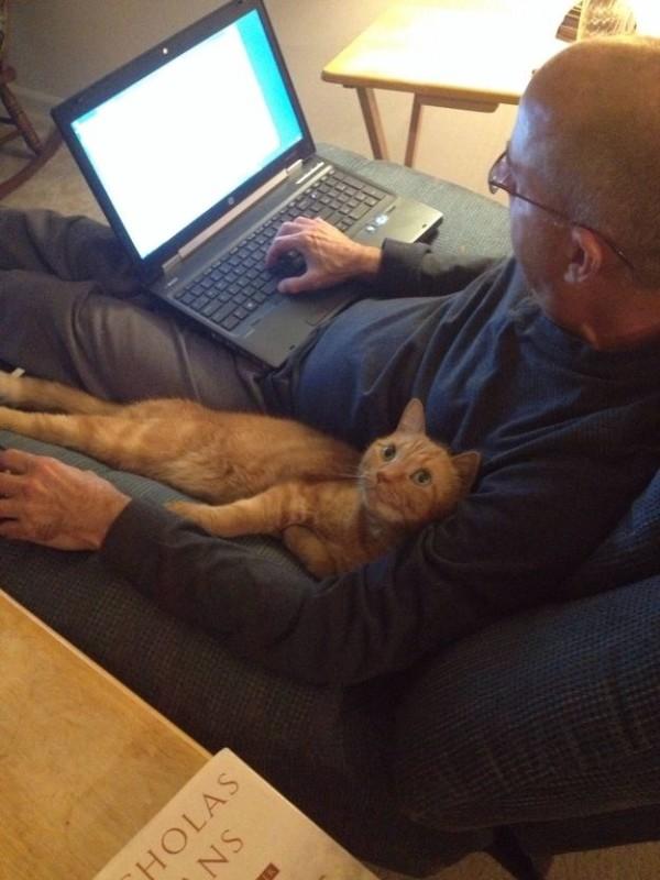 أسرار وحقائق لماذا يحب الأغلبية القطط ؟ القطط.-ثقف-�