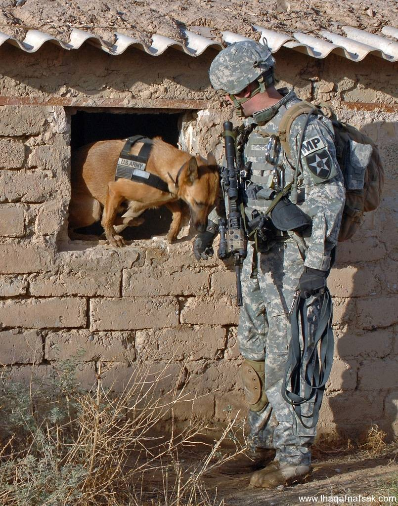 الكلاب . ثقف نفسك 10 تخيل كيف يتم استخدام الكلاب في الحروب