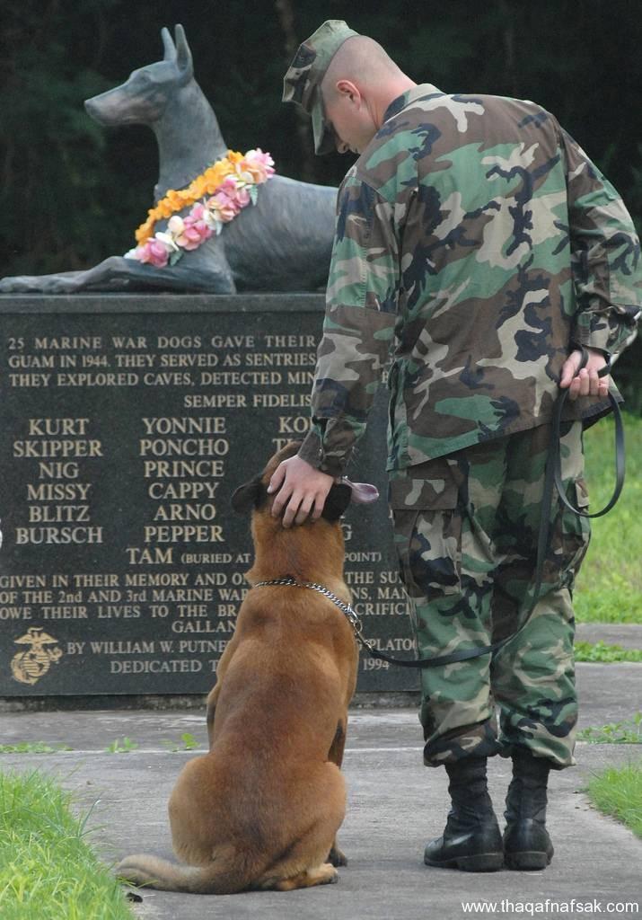 الكلاب . ثقف نفسك 2 تخيل كيف يتم استخدام الكلاب في الحروب