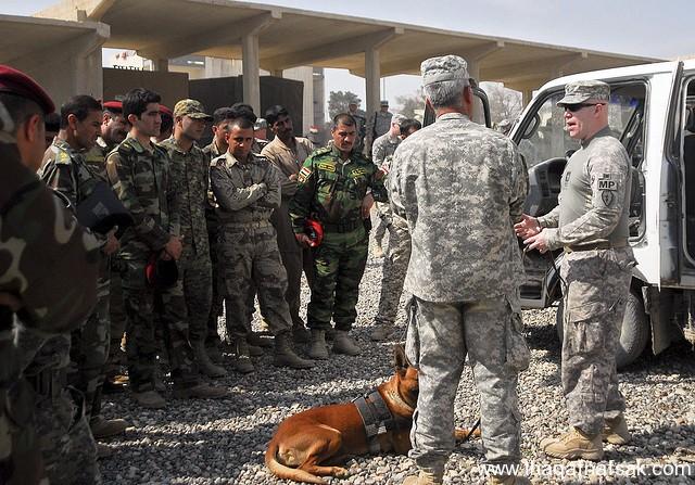 الكلاب . ثقف نفسك 22 تخيل كيف يتم استخدام الكلاب في الحروب
