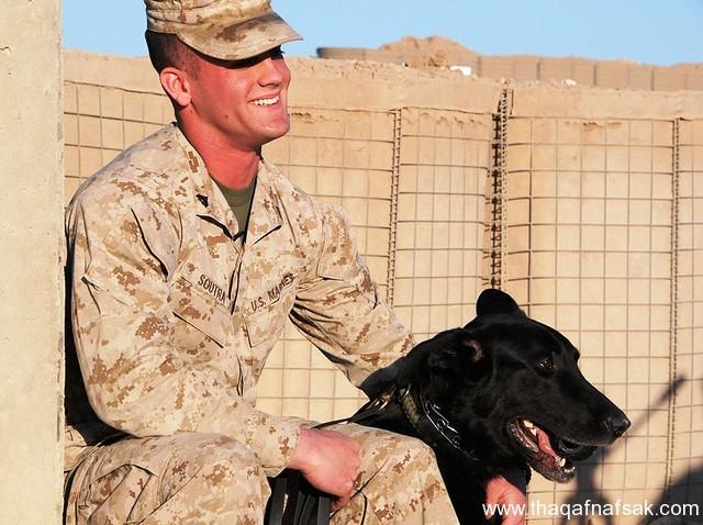 الكلاب . ثقف نفسك 3 تخيل كيف يتم استخدام الكلاب في الحروب