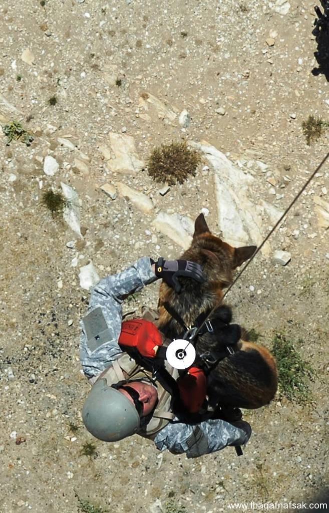 الكلاب . ثقف نفسك 5 تخيل كيف يتم استخدام الكلاب في الحروب