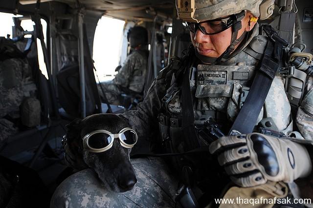 الكلاب . ثقف نفسك 7 تخيل كيف يتم استخدام الكلاب في الحروب