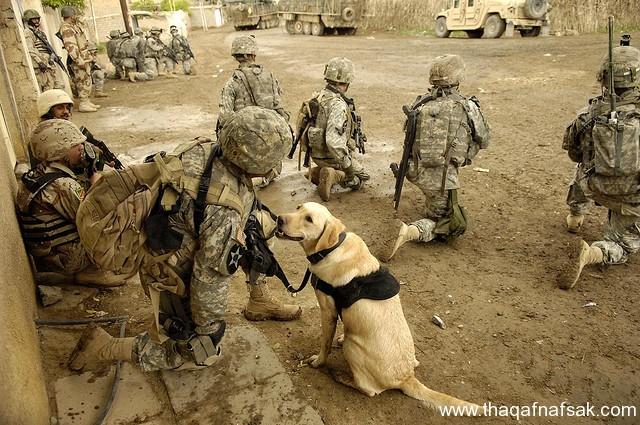 الكلاب . ثقف نفسك 9 تخيل كيف يتم استخدام الكلاب في الحروب