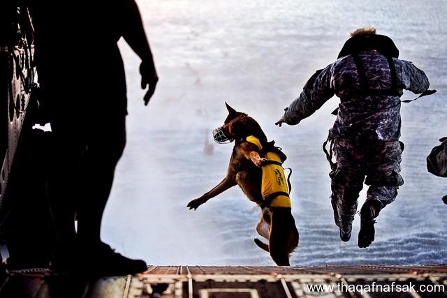 الكلاب . ثقف نفسك1 تخيل كيف يتم استخدام الكلاب في الحروب