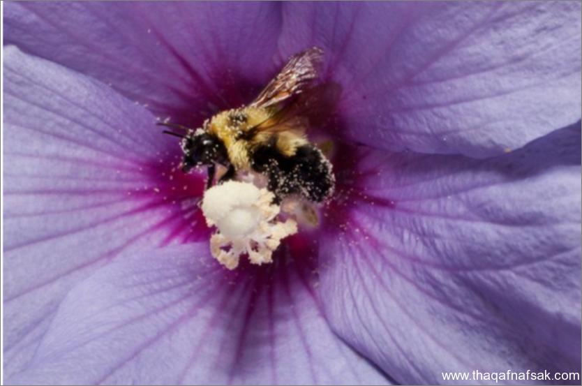 النحل- ثقف نفسك 6