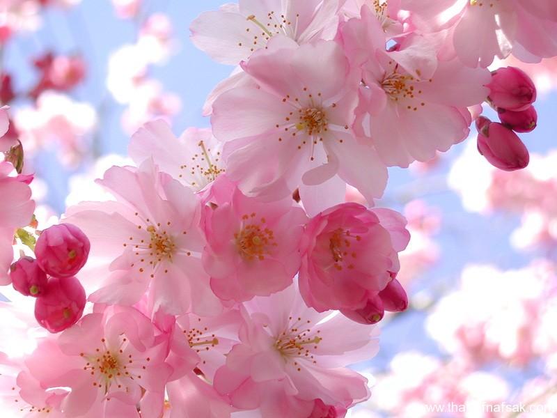 زهور ملونة ثقف نفسك1