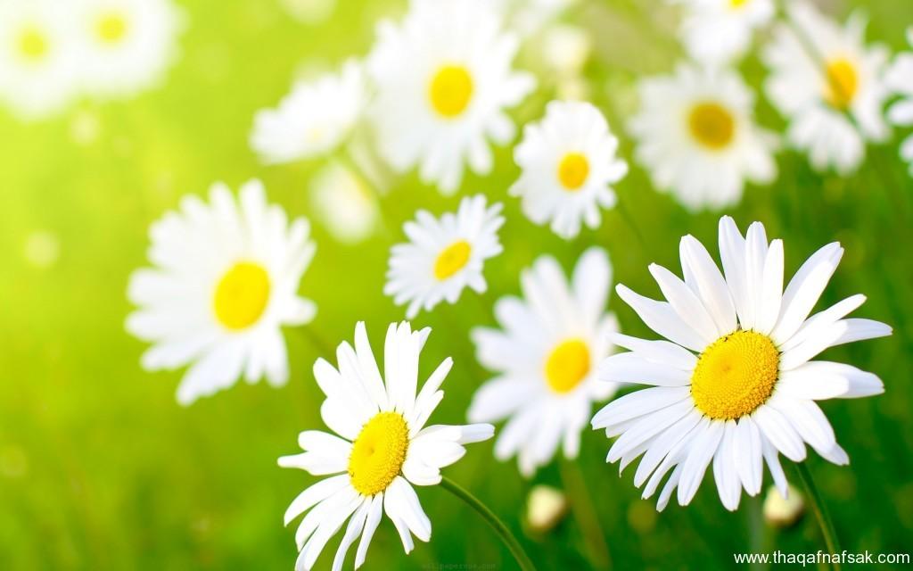 زهور ملونة ثقف نفسك4