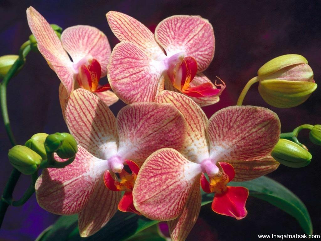 زهور ملونة ثقف نفسك5