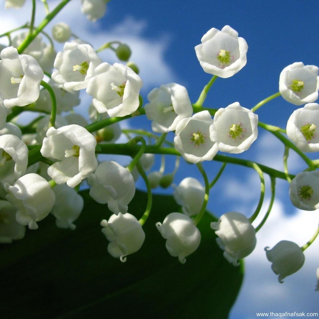 زهور ملونة ثقف نفسك8
