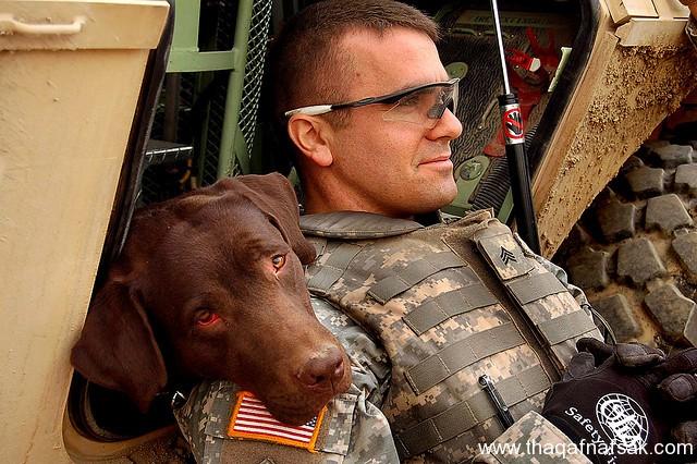 كلاب . ثقف نفسك 15 تخيل كيف يتم استخدام الكلاب في الحروب