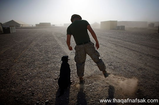 كلاب . ثقف نفسك 20 تخيل كيف يتم استخدام الكلاب في الحروب