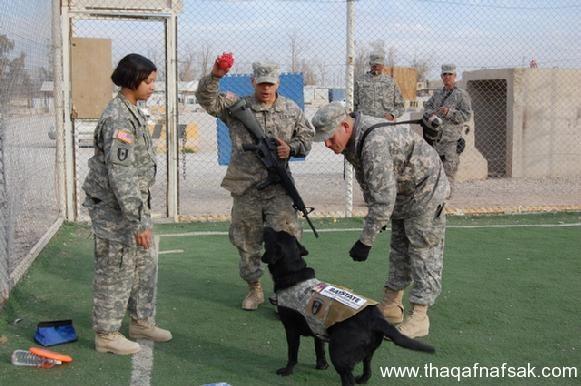 كلاب . ثقف نفسك 21 تخيل كيف يتم استخدام الكلاب في الحروب