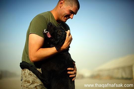 كلاب . ثقف نفسك 25 تخيل كيف يتم استخدام الكلاب في الحروب