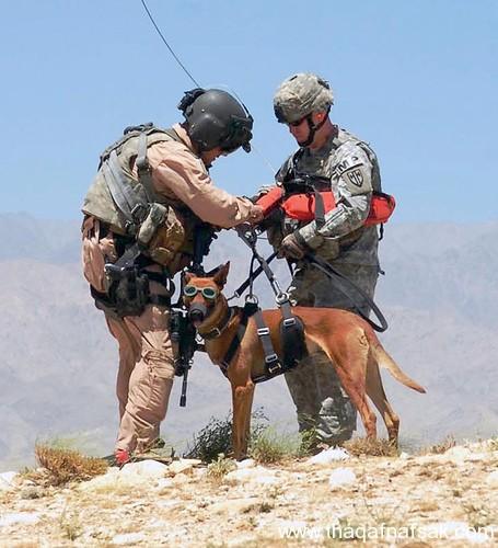 كلاب . ثقف نفسك 6 تخيل كيف يتم استخدام الكلاب في الحروب