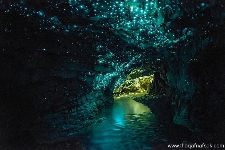 كهف سراج الليل ، ثقف نفسك 1 كهف سراج الليل في نيوزيلندا Waitomo Glowworm