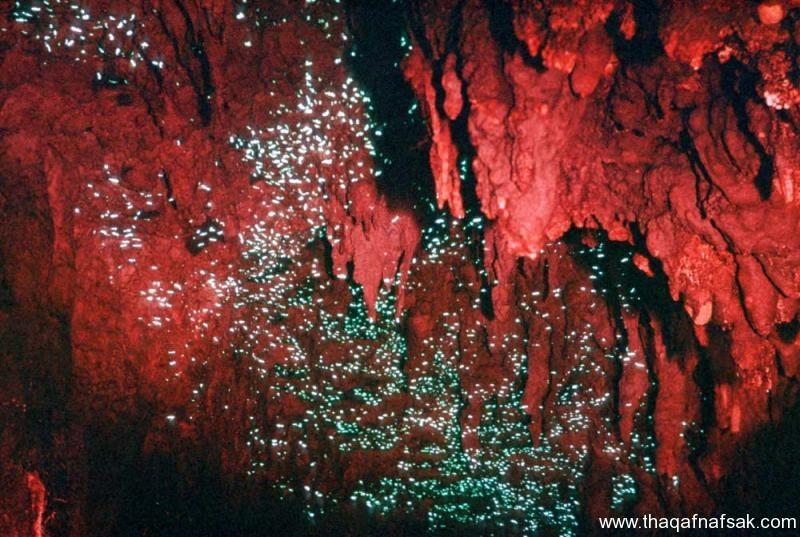 كهف سراج الليل ، ثقف نفسك 6 كهف سراج الليل في نيوزيلندا Waitomo Glowworm