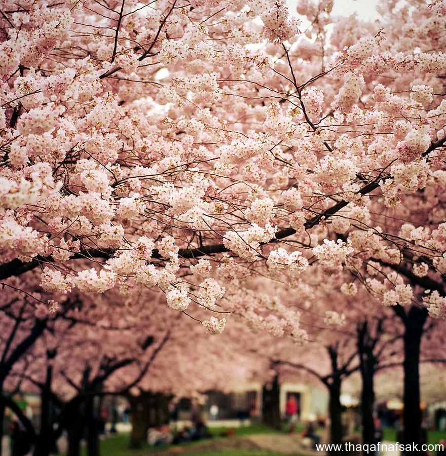مناظر خلابة في الربيع . ثقف نفسك 12