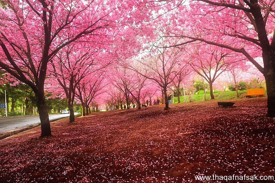 مناظر خلابة في الربيع . ثقف نفسك 3