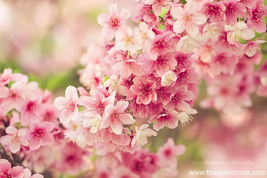 مناظر خلابة في الربيع . ثقف نفسك 5