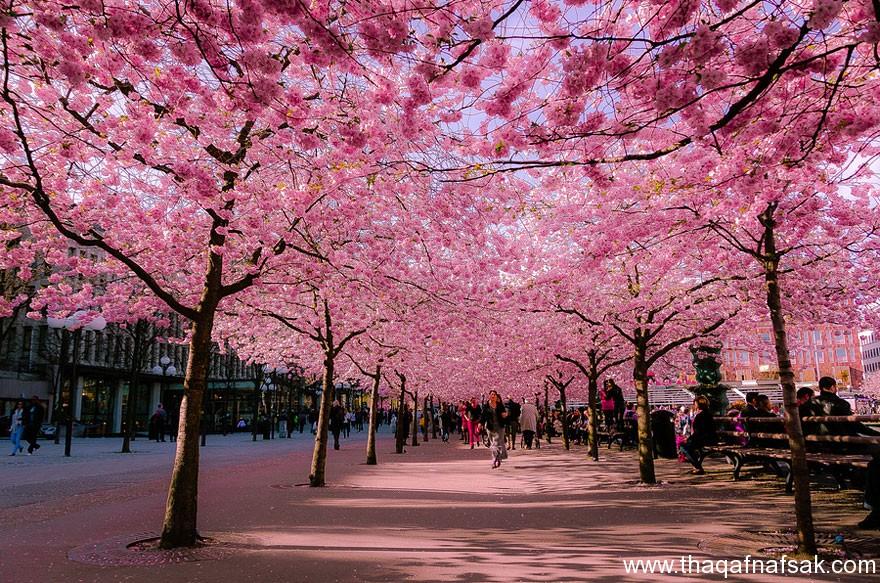 مناظر خلابة في الربيع . ثقف نفسك 6