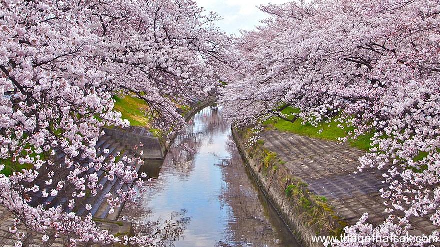 مناظر خلابة في الربيع . ثقف نفسك 9