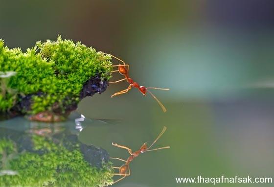 شاهد صور مدهشة من عالم النمل نمل-1-ثقف-نف