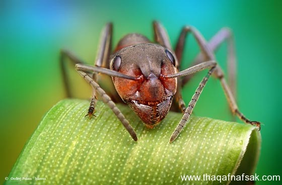 شاهد صور مدهشة من عالم النمل نمل-10-ثقف-ن�