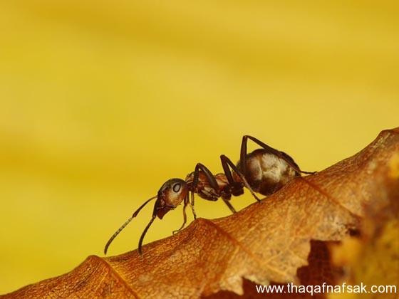 شاهد صور مدهشة من عالم النمل نمل-11-ثقف-ن�
