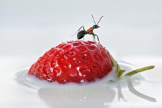 شاهد صور مدهشة من عالم النمل نمل-13-ثقف-ن�