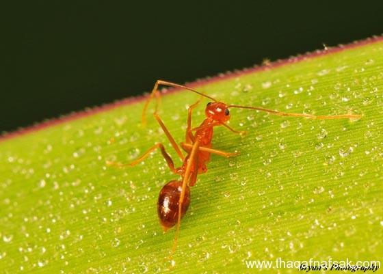 شاهد صور مدهشة من عالم النمل نمل-15-ثقف-ن�