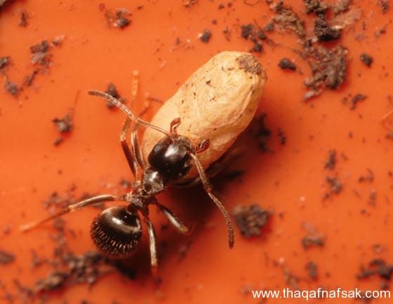 شاهد صور مدهشة من عالم النمل نمل-18-ثقف-ن�
