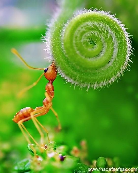 شاهد صور مدهشة من عالم النمل نمل-19-ثقف-ن�
