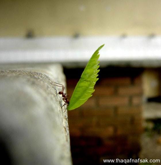 شاهد صور مدهشة من عالم النمل نمل-2-ثقف-نف