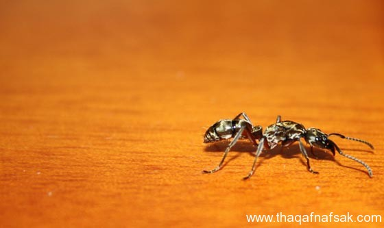شاهد صور مدهشة من عالم النمل نمل-20-ثقف-ن�