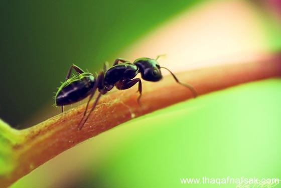شاهد صور مدهشة من عالم النمل نمل-21-ثقف-ن�