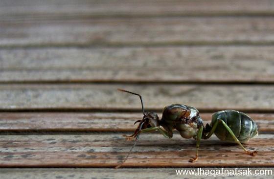شاهد صور مدهشة من عالم النمل نمل-22-ثقف-ن�