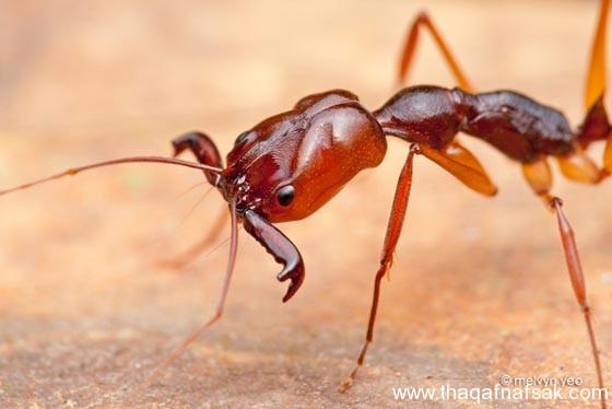 شاهد صور مدهشة من عالم النمل نمل-24-ثقف-ن�