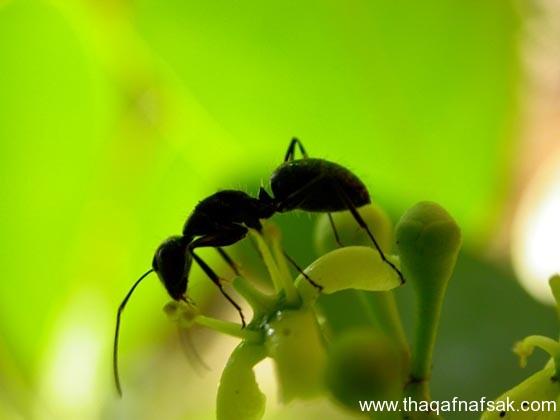 شاهد صور مدهشة من عالم النمل نمل-25-ثقف-ن�