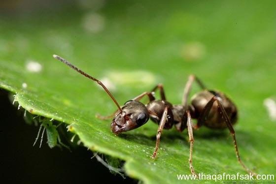 شاهد صور مدهشة من عالم النمل نمل-29-ثقف-ن�