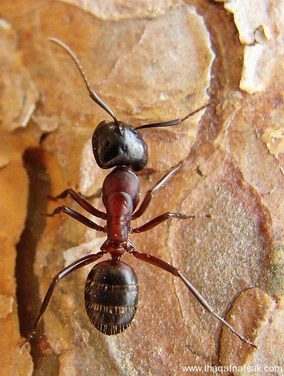 شاهد صور مدهشة من عالم النمل نمل-30-ثقف-ن�