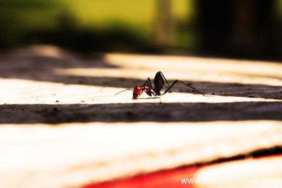 شاهد صور مدهشة من عالم النمل نمل-33-ثقف-ن�