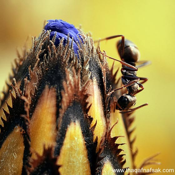 شاهد صور مدهشة من عالم النمل نمل-38-ثقف-ن�