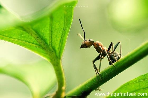 شاهد صور مدهشة من عالم النمل نمل-40-ثقف-ن�