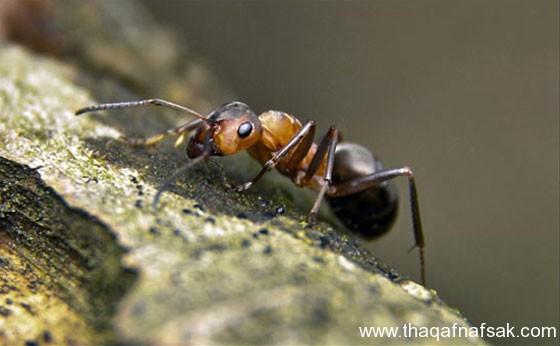 شاهد صور مدهشة من عالم النمل نمل-42-ثقف-ن�