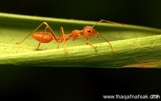 شاهد صور مدهشة من عالم النمل نمل-44-ثقف-ن�